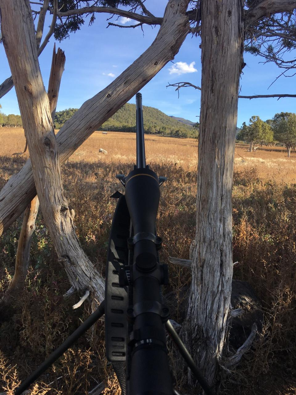 Colorado hunting land